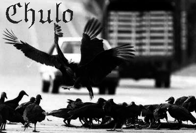 Chulo2
