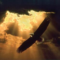 Soaring eagle 150