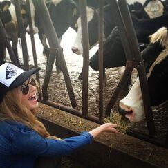 Caroline cows