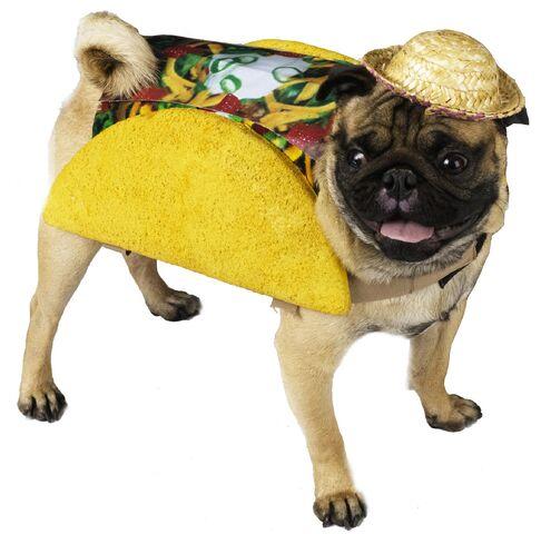 File:Taco Dog.jpg