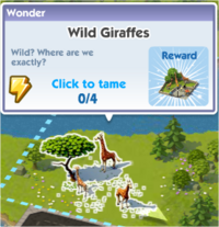 Wild Giraffes