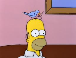 File:Bird grooming homer.jpg