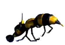 File:225px-Wasp Camera.png