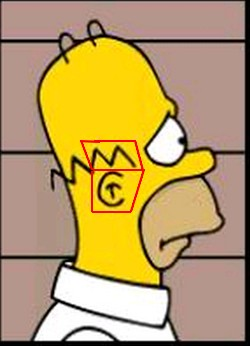 Homer simpson wiki les simpson wikia - Comment faire bart simpson ...