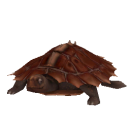 File:Spiny Turtle.png
