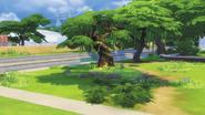 Sylvan Tree