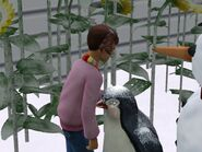 PettingPenguin