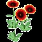 File:Wildflower Indian Blanket.png