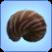 Nautilus Shell.png
