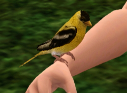 File:Goldfinch.png