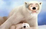 Skippy Shorts Old Man Polar Bear