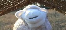 Skippy Shorts Sheep