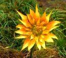 Nicodemus flower