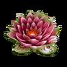 Ingredient-Lotus-SmallIcon
