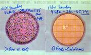 Petrifilm E. coli