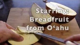 Breadfruit and solar cooker in 40 seconds
