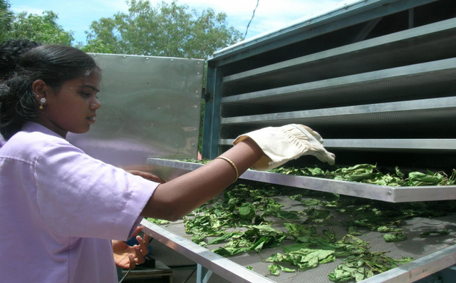 File:Planters Energy Network, arranging food trays, 1-8-15.png