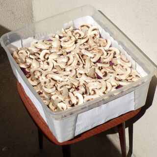 12) Champignons avant séchage