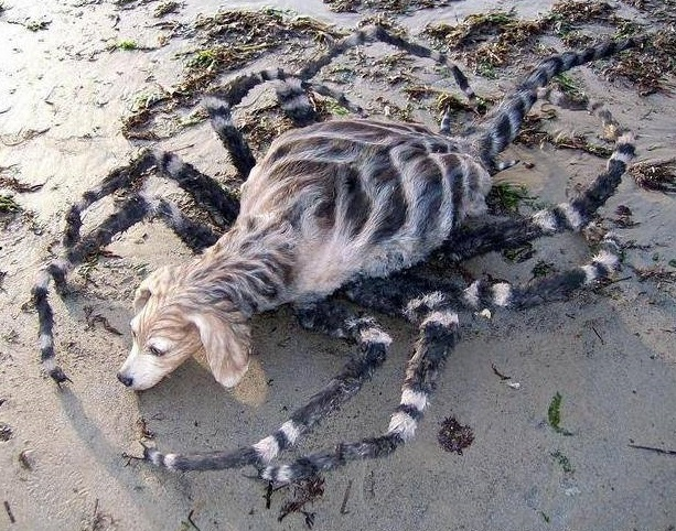 Cold case - The spider web killer : SomeOrdinaryGamers Wiki : Fandom ...