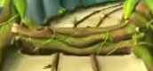 File:Tree 5 Jungle.png