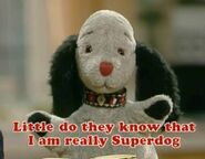 Superdog2