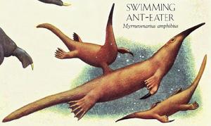 Swimming Anteater