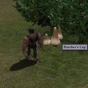 Harvestablebutcherscap