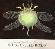 Will-o-the-Wisp-female