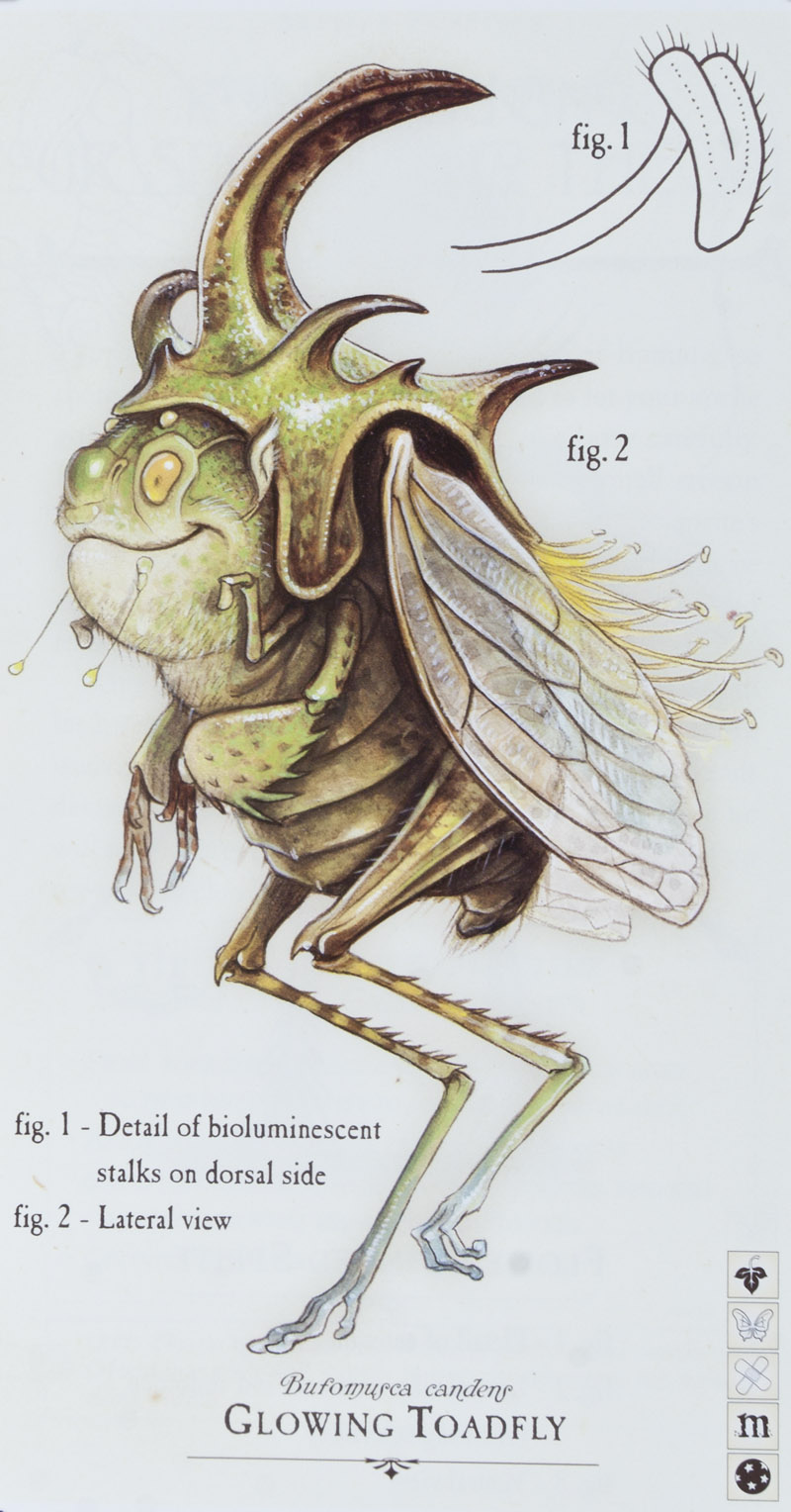 Image - ToadflySprite.jpg : Spiderwick Chronicles Wiki ...