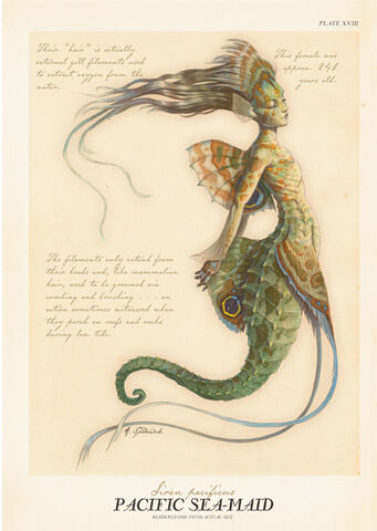 File:Pacific-sea-maid.jpg