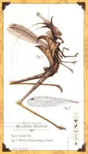 Bearvedhopper.bmp