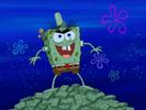 Mouldy Sponge