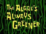 The Algae's Always Greener