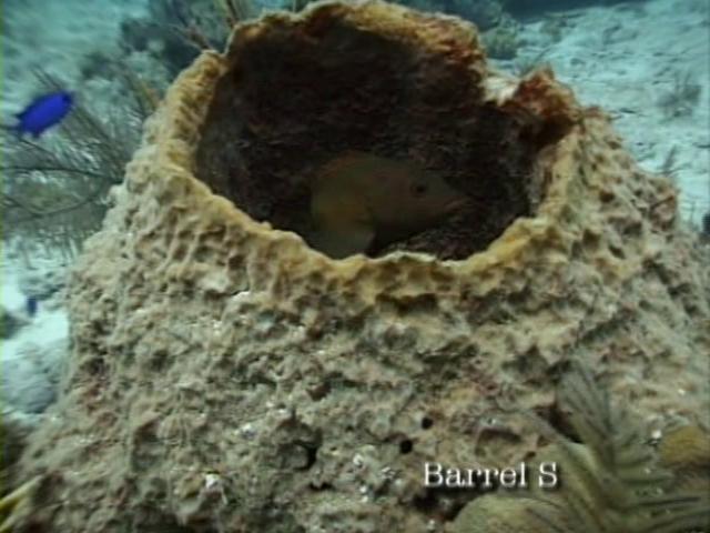 File:Case of the Sponge Bob 026.png