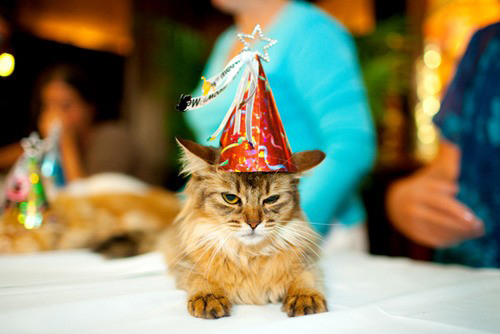 File:Kitty hates birthday surprises.jpg