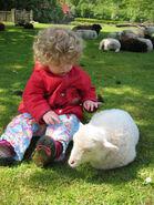 Kinderboerderij peuter met lam