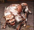 Psy dog