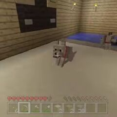 Stampy Stampy Cat Makes The Abandoned House