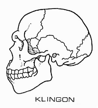 File:Klingon augment skull diagram.JPG