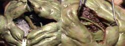 Cytoplasmic anatomy