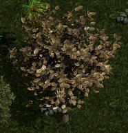 File:Y'gora tree.jpg