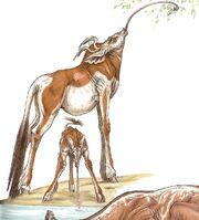 Ikopi Wildlife