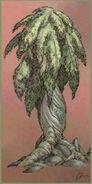 Boffa-plant