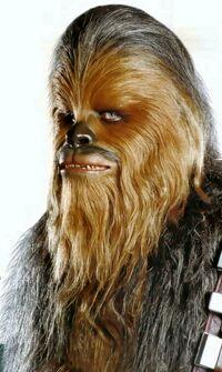 Groomed Chewie