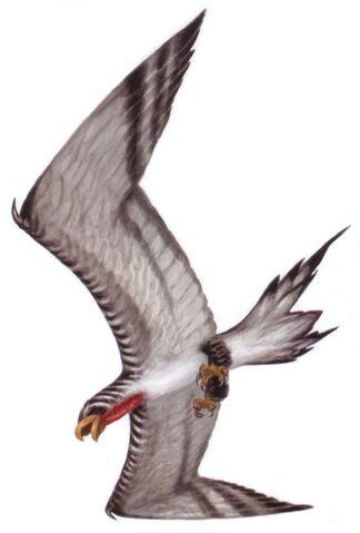 File:Corellian banshee bird TofG.jpg