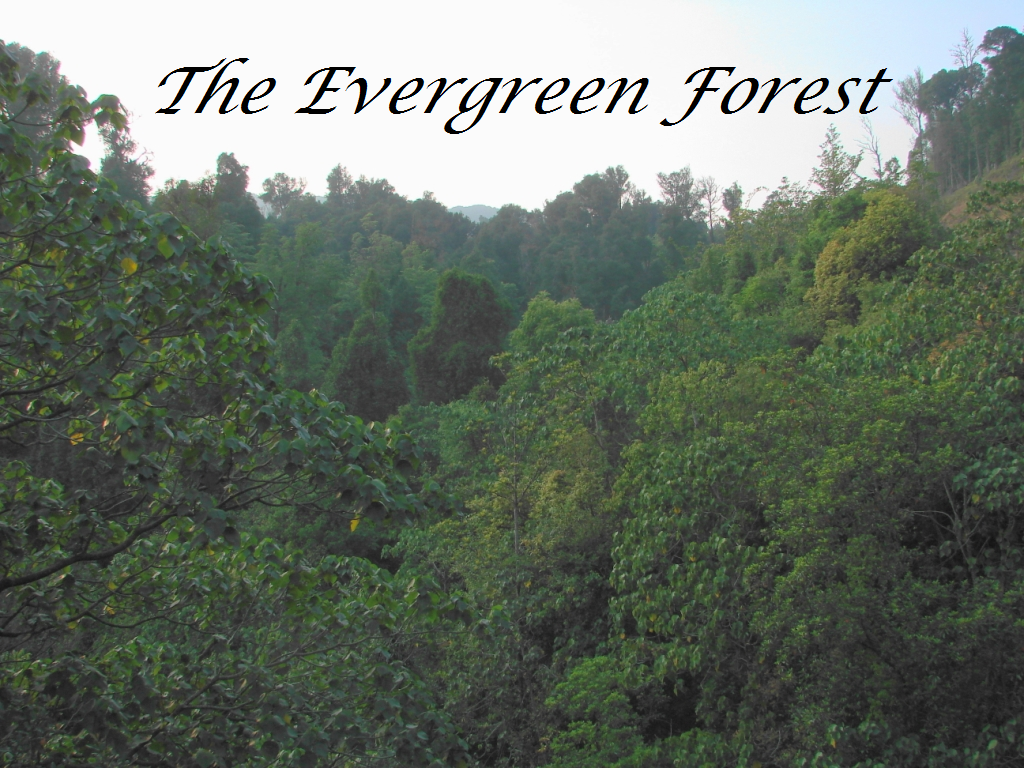 The evergreen forest strikeclan fanfiction wiki fandom for The evergreen