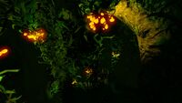 Kelp Forest Night (2)