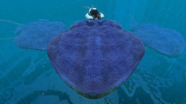 File:Reefback (6).jpg