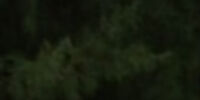 South Team (Expedition Robinson 1997)