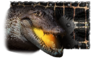 Alligator Paint